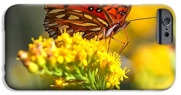 Buterfly iPhone Cases - Pea Island Butterfly iPhone Case by Adam Jewell