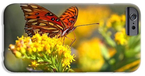 Buterfly iPhone Cases - Pea Island Gulf Fritillary iPhone Case by Adam Jewell