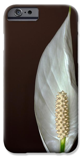 One iPhone Cases - Peace Flower iPhone Case by Debbie Oppermann