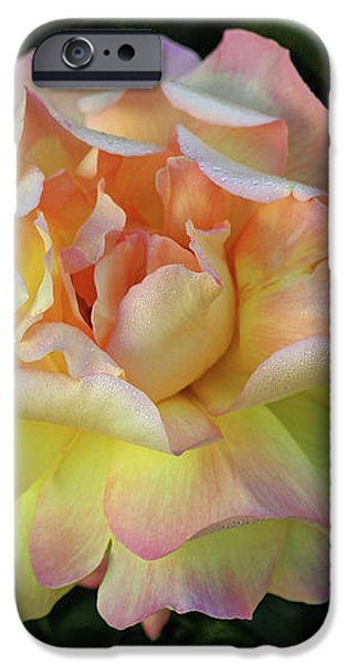 Peace Rose iPhone Case by Sandy Keeton