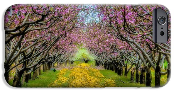 Crops iPhone Cases - Peach Blossoms Dandelion Carpet iPhone Case by Henry Kowalski