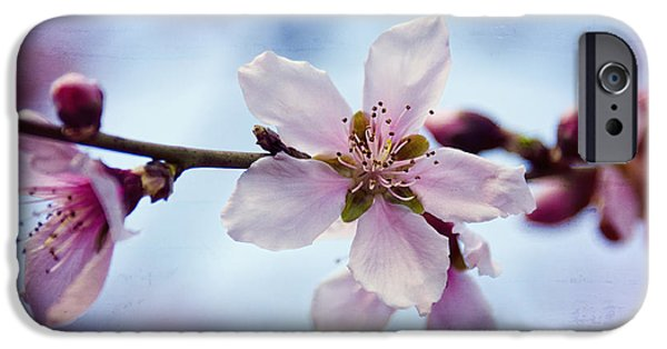 Floral Photographs iPhone Cases - Peach Blossoms  iPhone Case by Saija  Lehtonen