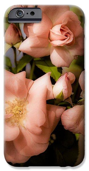 Peach Roses iPhone Cases - Peach Floribunda Roses iPhone Case by Julie Palencia