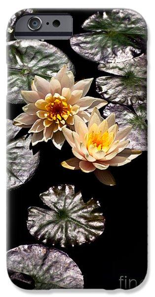 Aquatic Plants iPhone Cases - Peaches and Cream iPhone Case by Venetta Archer