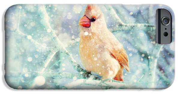 Winter Scene iPhone Cases - Peaches in the Snow iPhone Case by Amy Tyler