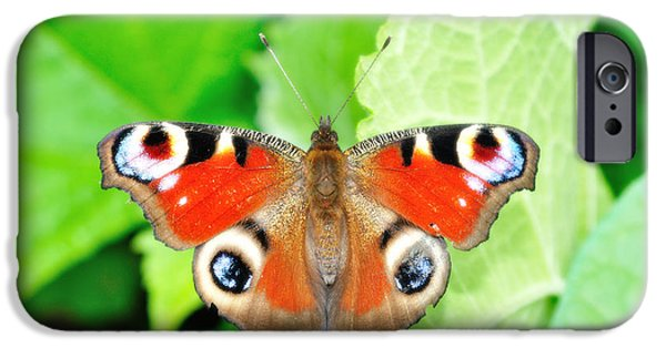 Buterfly iPhone Cases - Peacock buterfly iPhone Case by Martin Capek