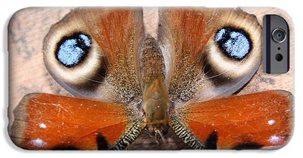 Refuses To See iPhone Cases - Peacock Butterfly iPhone Case by Liz Bills