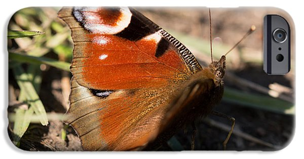 Fauna iPhone Cases - Peacock Butterfly iPhone Case by Robert Carr