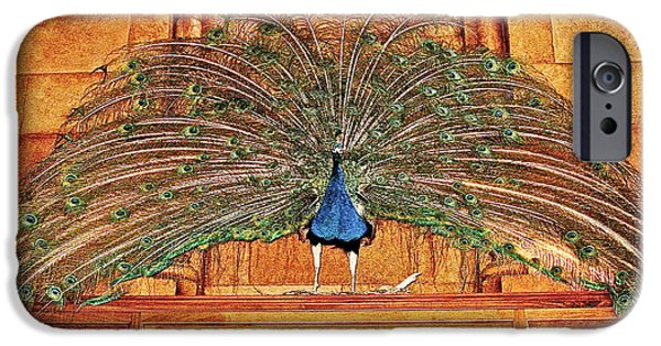Smithsonian iPhone Cases - Peacock in Smithsonian Castle in Washington DC iPhone Case by Ruth Hager