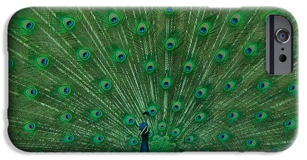 Peacock iPhone Cases - Peacock iPhone Case by Sheela Ajith