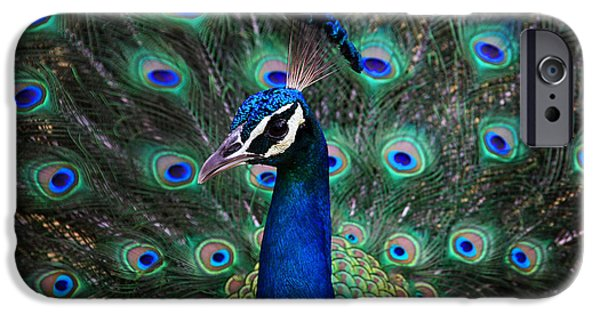 Peacock iPhone Cases - Peacock iPhone Case by Unknown