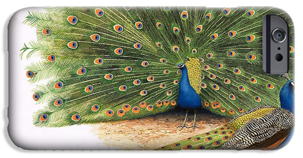 Peacock iPhone Cases - Peacocks iPhone Case by RB Davis