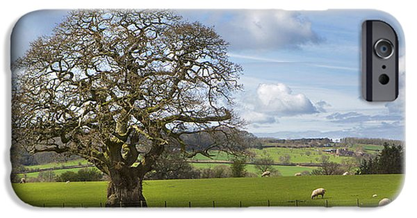 Agricultural iPhone Cases - Peak District Tree iPhone Case by David Hare