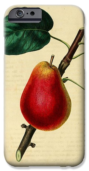 Pear Tree Paintings iPhone Cases - Pear 1829 iPhone Case by Philip Ralley