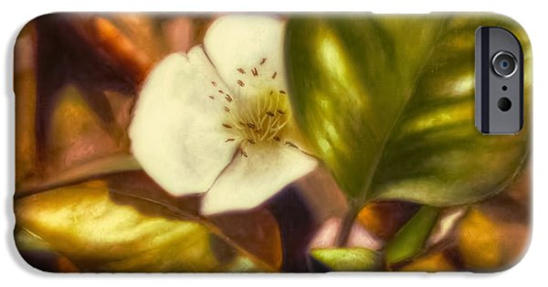 Pear Tree Paintings iPhone Cases - Pear Blossom iPhone Case by Melissa Herrin