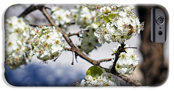 Pears iPhone Cases - Pear Blossom Pollinator iPhone Case by Cricket Hackmann