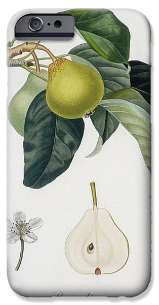 Flora Drawings iPhone Cases - Pear iPhone Case by Pierre Antoine Poiteau