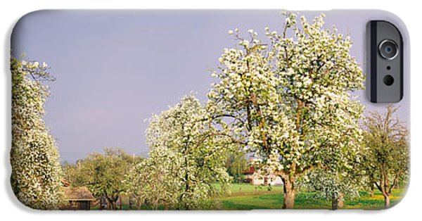 Pears iPhone Cases - Pear Trees In A Field Pyrus Communis iPhone Case by Panoramic Images