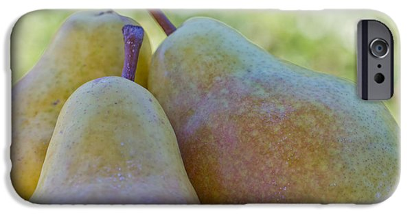 Agriculture iPhone Cases - Pear Trio iPhone Case by Heidi Smith