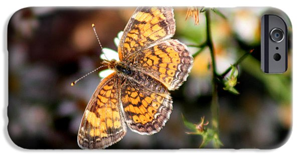 Meadow Photographs iPhone Cases - Pearl Crescent Butterfly  iPhone Case by Karen Adams