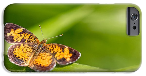 Pearls iPhone Cases - Pearl Crescent notecard iPhone Case by Everet Regal