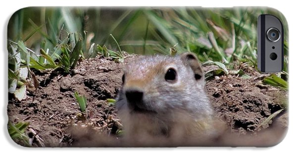 Ground Level iPhone Cases - Peek A Boo iPhone Case by Dan Sproul