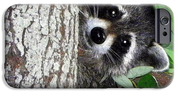 Raccoon Digital Art iPhone Cases - Peek A Boo Raccoon iPhone Case by Sheri McLeroy