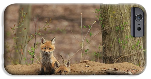 Fox Kit iPhone Cases - Peeking from the fox hole iPhone Case by Everet Regal