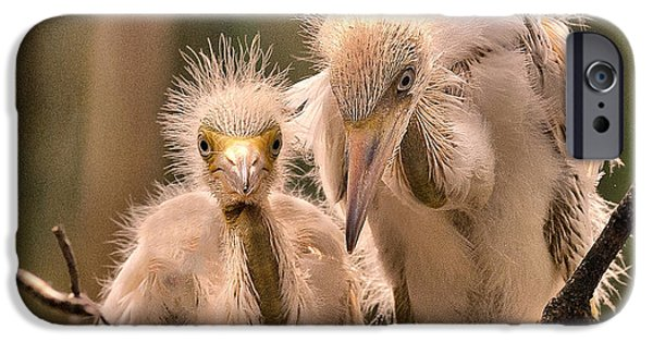 Baby Bird iPhone Cases - Peepers iPhone Case by Rick Barnard