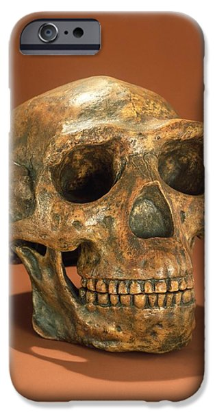 Teeth iPhone Cases - Peking Mans Reconstructed Skull, Cave Choukoutien Bone iPhone Case by Chinese School