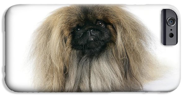 Pekingese iPhone Cases - Pekingese Dog iPhone Case by John Daniels