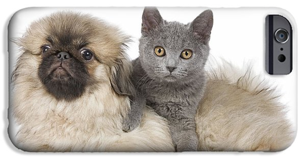 Pekingese iPhone Cases - Pekingese Puppy And Kitten iPhone Case by Jean-Michel Labat