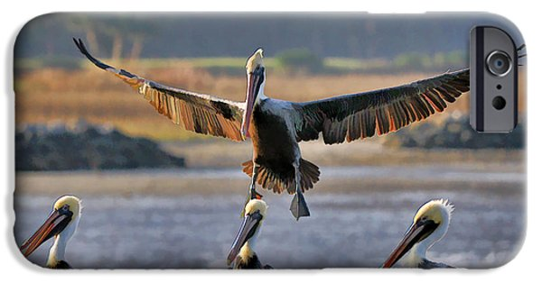 Pelican Coming In For Landing iPhone Case by Dan Friend