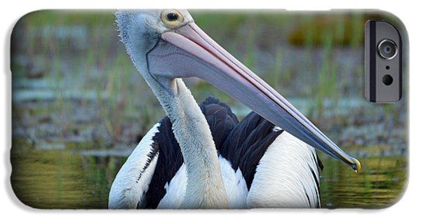 Birds iPhone Cases - Pelican iPhone Case by David Clode