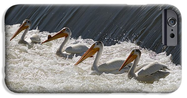Pelicans iPhone Cases - Pelican Four iPhone Case by Mike  Dawson
