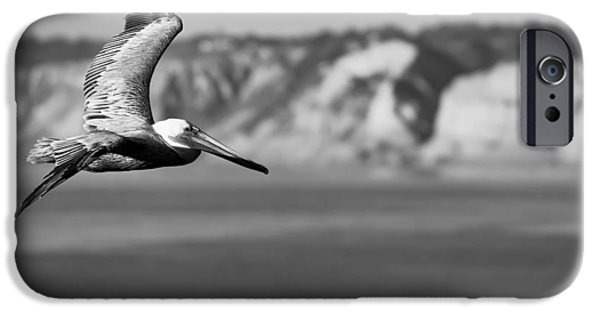 Flight Photographs iPhone Cases - Pelican in Black and White iPhone Case by Sebastian Musial