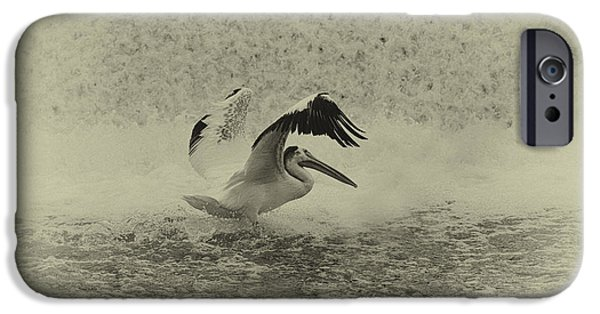 Appleton Photographs iPhone Cases - Pelican Landing in black and white iPhone Case by Thomas Young