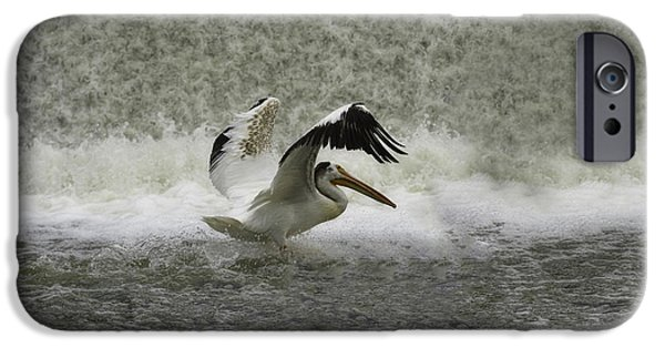 Appleton Photographs iPhone Cases - Pelican Landing in Color iPhone Case by Thomas Young