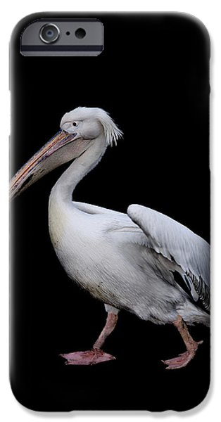 Pelicans iPhone Cases - Pelican iPhone Case by Mark Rogan