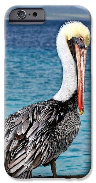 Recently Sold -  - Fauna iPhone Cases - Pelican Portrait iPhone Case by Jean Noren