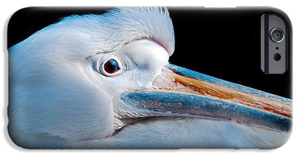 Animals Photographs iPhone Cases - Pelican Portrait iPhone Case by Mark Rogan