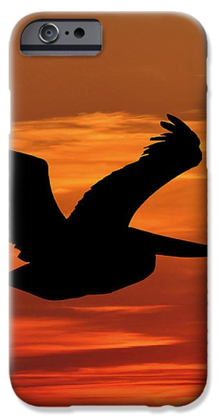 Pelican Profile iPhone Case by Al Powell Photography USA