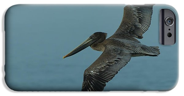 Sea iPhone Cases - Pelican iPhone Case by Sebastian Musial