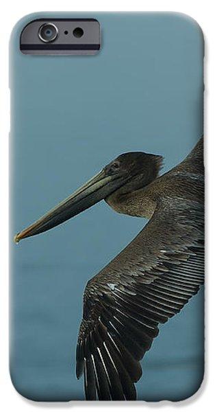 Pelican iPhone Case by Sebastian Musial