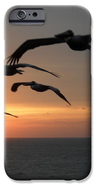 Pelican Sun up iPhone Case by Laurie D Lundquist