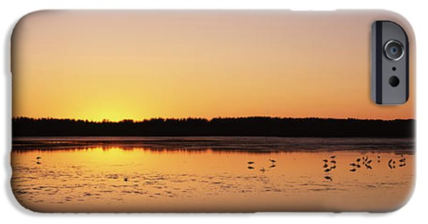 J N Ding Darling National Wildlife Refuge iPhone Cases - Pelicans And Other Wading Birds iPhone Case by Panoramic Images