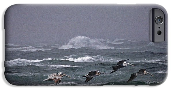 Photos Of Birds iPhone Cases - Pelicans In A Row iPhone Case by Skip Willits