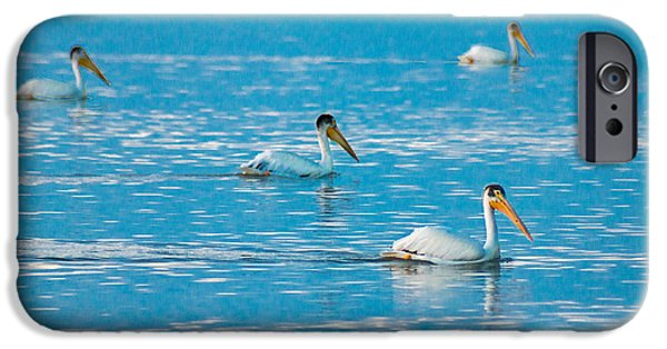 Sea Birds iPhone Cases - Pelicans On Blue iPhone Case by Bill Pevlor