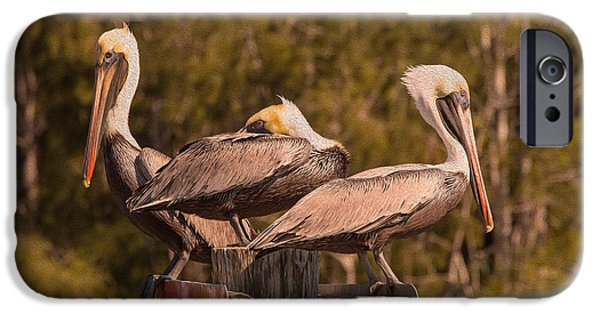 Sea Birds iPhone Cases - Pelicans on Watch iPhone Case by John Bailey