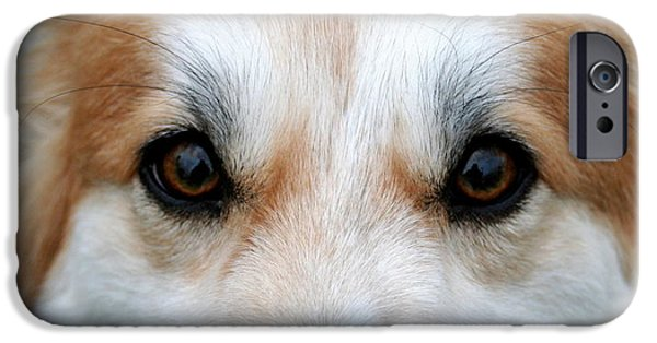 Recently Sold -  - Dog Close-up iPhone Cases - Pembroke Welsh Corgi Double Vision iPhone Case by Lisa Anne McKee